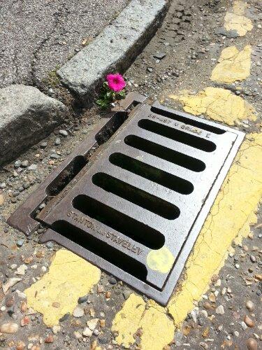 Drain Flower
