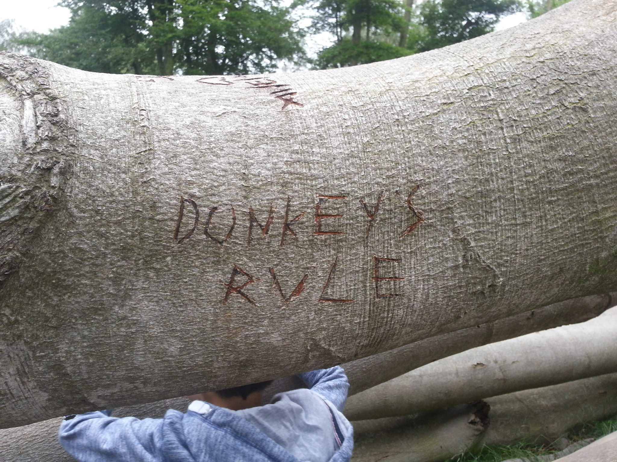 Donkeys Rule